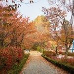 Seoul Children's Grand Park Foto