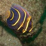 Foto de Huatulco Dive Center