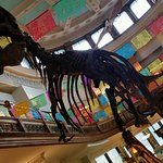 Dino at Redpath Museum