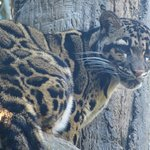 Nashville Zoo Foto