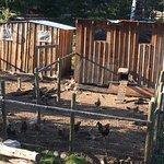 Photo of Siwash Lake Wilderness Resort