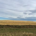 Alberta Harvest on the way out of town, R & R Inn Motels, n 621 12th Street, Bassano, Alberta