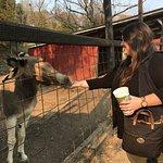 Foto de Smoky Mountain Deer Farm & Exotic Petting Zoo