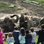 Oregon Zoo Foto