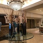 Lobby orchids
