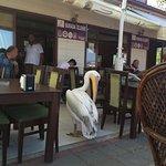 Kordon Pelikan Cafe Restaurant resmi