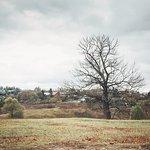 Природа Ясной Поляны, осень