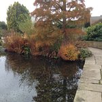 Lovely Autumn colours by one of the ponds at Hyde Hall.
