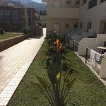 Lovely bird of paradise plants in bloom out side our ground floor apartment. Bit wow when sun co