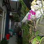 Photo de Vesper Homestay