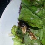La salade mal conservée à gauche des morceaux de noix.