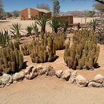 Many different Cactus.