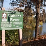 The confluence of the Alabama and Cahaba Rivers.
