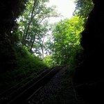 Foto de Penn's Cave