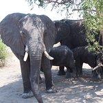 First elephant sighting!