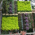 A poolside wallhanging made from succulents!