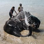 Helping to clean and elephant