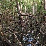 Vista do mangue