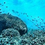 Nakupenda Diving Center