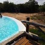 Фотография Kapama River Lodge