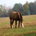 The Red Horse Inn Foto