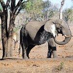 elefante che fa' la doccia matuttina