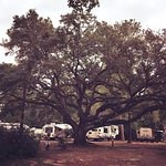 Charleston KOA照片