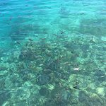 Turquoise water, fish and coral.
