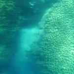 Foto di Coral Beach Nature Reserve