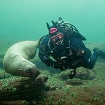 Diving at Hornby Island