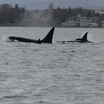 Photo of SpringTide Whale Watching & Charters
