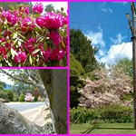 Bright is very beautiful with lots of flowering bushes and trees. And a very busy tourist trade