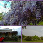 Top: wisteria; Bottom L: view of motel:Bottom R: view from the veranda