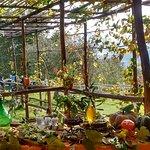 Az. Agr. Domenica 13 Novembre 16, assaggio Olio EVO fresco franto, Pane, Olive, Formaggio con no