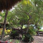 Photo of Kura Hulanda Restaurant