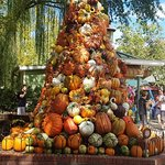 what you might see at Dollywod if you visit in October/November-fall decorations