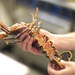 local lobsters