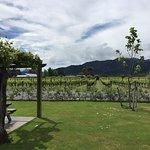 At the Wairau River winery