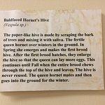 Description of a Hornet's nest