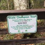 Champion Tree description