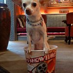 Annabelle our little movie theater greeter.