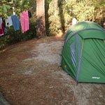 Photo de Camping Club d'Arcachon