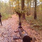 Bois de Lauzelle