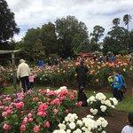 Auckland Rose Park Hotel Foto