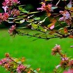 Fleurs et Jardin du Pavillon de Beaumont