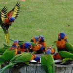 Bird feeding time...twice a day...great show