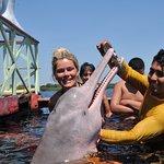 visite des botos dauphin d'Amazonie rose