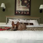 Henry makes himself right at home in the pet-friendly room/
