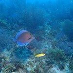 Foto di Florida Keys Dive Center