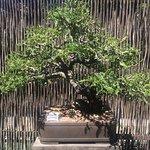 Botanical Garden University of Stellenbosch Foto